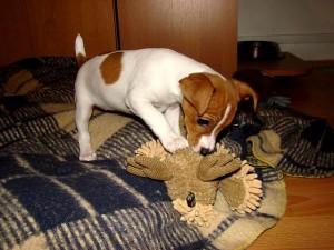 hracky pro psy