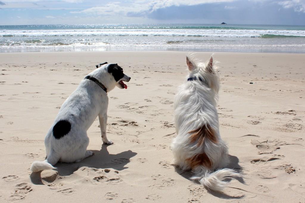 pes u more